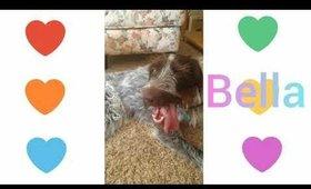 Bella the dog had a good run!💜💙💛