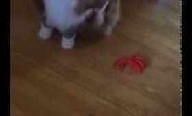2 cats 1 Fake spider