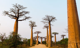Now Trending: Baobab Oil in Skincare and Haircare