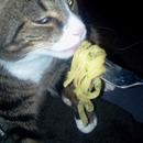 Spike eating pasta