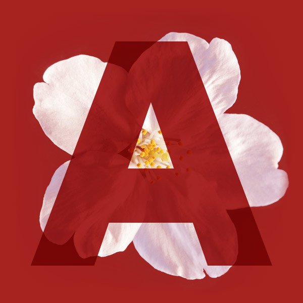 Letter A from the name Sakura with a cherry blossom
