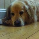 pic of ny puppa dog