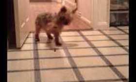 Crazy dog!!