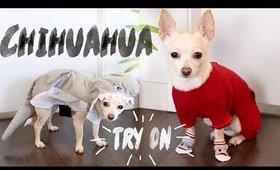 DRESSING UP MY DOG | Karismas Day 15