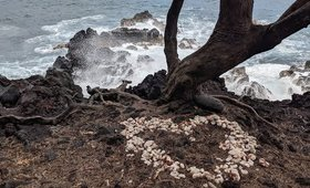 First Days in Pahoa, Hawaii -- WorkAway, Beaches, Vegan Food Galore