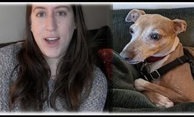 Should you get an Italian greyhound? || My experience & recommendations