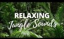 JUNGLE SOUNDS   [Relaxing Jungle Sounds for Sleeping]