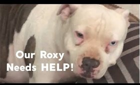 HELP Our Roxy figure out whats wrong with her