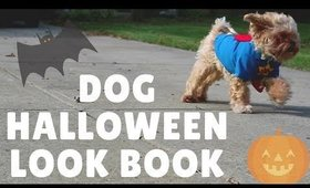 My Dogs Try On Halloween Costumes | Dog Video