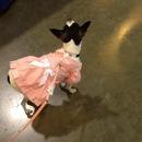 Cute Doggy Fashion 🎀💕🐩:P