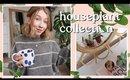 Houseplant Collection   Rhiannon Ashlee