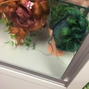 Fantacy hair competition back when i was in school