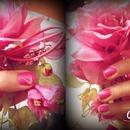 Rose in winter ❄️