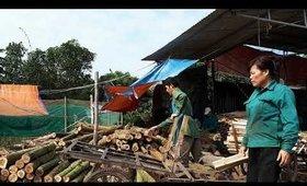 Hướng dẫn phân loại các loại gỗ