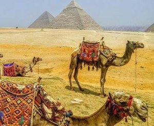You might ask us what is so special about a luxury Egypt tour. We want to tell you that these tours are being booked at a very affordable cost budget. You and your dear ones will appreciate luxury Egypt tours as they can be booked online in the smartest way. Just come to Egypt as this is the land where you will see many wonders. Visit this website https://egyptluxuryprivatetours.com/ to book luxury Egypt tours that may be memorable for you!