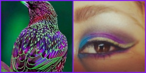 Makeup look inspired by this gorgeous little bird I found off pinterest.