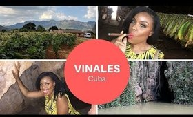 Day Trip to VINALES (Cuban Countryside 3 Hours Away from Havana)   Cuba Travel Vlog (Part 2)
