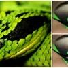 Snake inspired