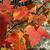 Autumn K.
