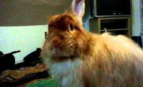 Meet my Bunny PUMPKIN!!!