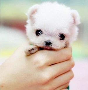 Just totes adorbs puppy