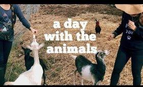 VLOG: VISITING ALOHA ANIMAL SANCTUARY | thefabzilla