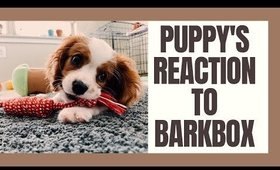 MY PUPPY'S REACTION TO BARK BOX⎮ROMPER THE CAV