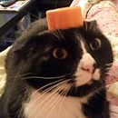 Pillbox hat ;)