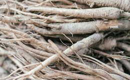 Is Ginseng the Ingredient Your Wellness Routine Is Missing?
