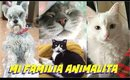 😽Conoce  a mi famila de Animalitos ! 🐶/ Meet my Pet Family 🐈| auroramakeup