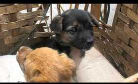 Puppies in China at local market (Part 1)