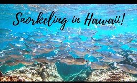 Best Snorkeling in Honolulu Hawaii | Shark's Cove Snorkel Adventure