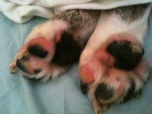 lilly's toesies