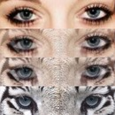eyes tiger